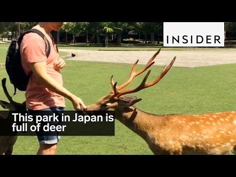 This park in Nara, Japan, is full of polite deer
