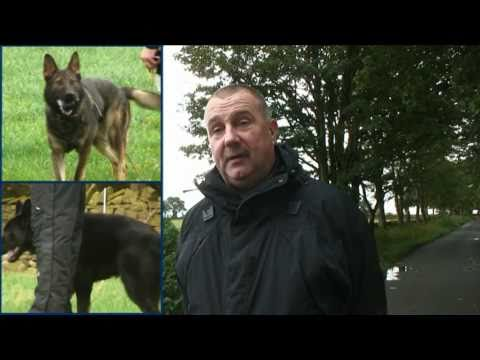 Cumbria Police Puppies - Part 3 - Training - The Boys Are Back