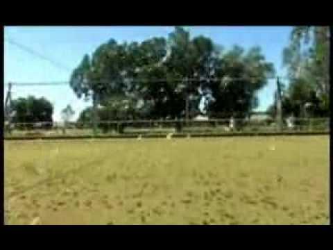 Australia - L'invasione delle locuste nel Queensland