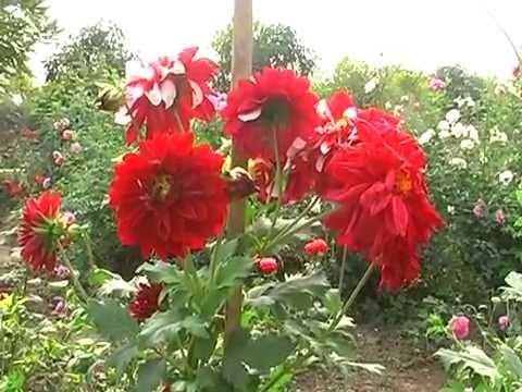 Patharia Motimpur A Beautiful Tourist Place of Chhattisgarh