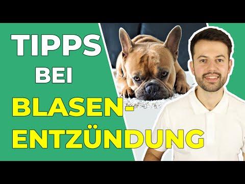 Blasenentzündung Beim Hund: Erkennen Und Richtig Handeln!