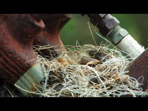 A Journey in Nature - Sandhill Crane Documentary in Central Nebraska