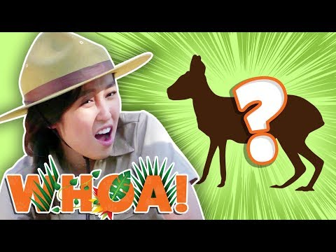 THE CUTEST ANIMAL YOUVE NEVER HEARD OF Whoa! Nature Show
