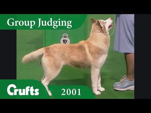 Siberian Husky wins Working Group Judging at Crufts 2001