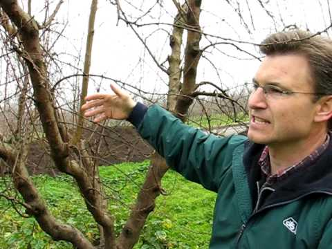 Orchard Health, Growing Fruit Trees Organically, Protecting Crops