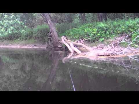 Massena NY Fishing Series #3 - Tributary Fishing For Muskies