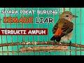 Suara Kemade Betina Pikat Gacor Terbukti Bikin Burung Kemade Cabe Bisu Langsung Nyaut Ngobra  Mp3 - Mp4 Download