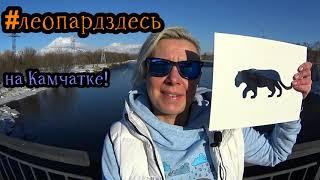 Дальневосточный леопард на Камчатке! #леопардздесь