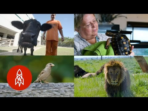 Five Stories of Ordinary People with Extraordinary Compassion for Animals
