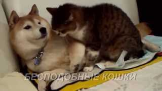 Бесподобные кошки - Funny cats. Дружба кошки и собаки:)