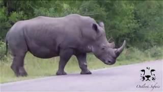 Подборка - Животные на дороге / animals on the road