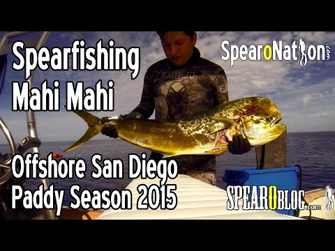 Spearfishing San Diego Offshore Paddy Hopping