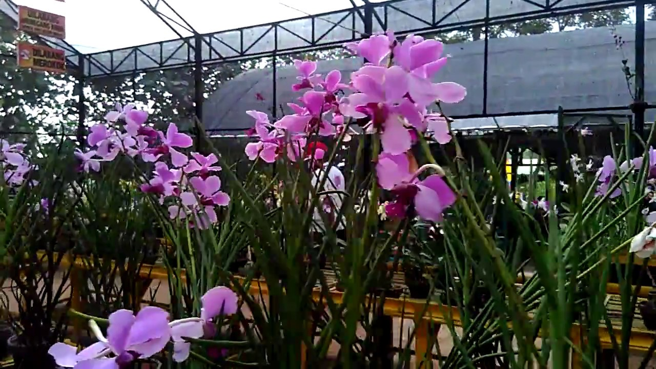 Taman Bunga Anggrek Kediri Youtube
