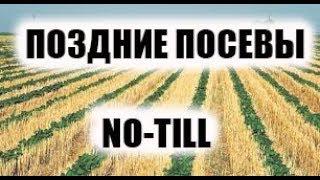 Июльские всходы подсолнечника. Обзор позднего посева по no-till