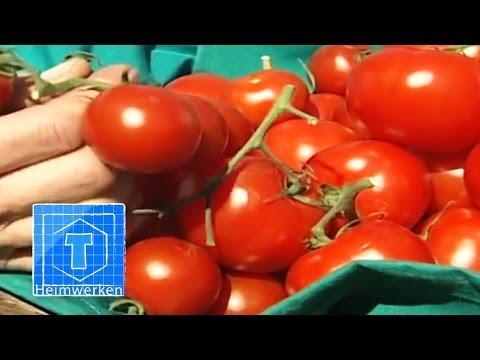 Tomaten anbauen - Tipps für den Anbau von Tomaten im Garten | ToolTown Garten Tipp