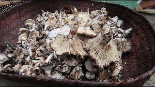 Ăn nấm rừng | Hoa Ban Tây Bắc