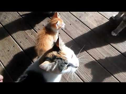 Cat attack