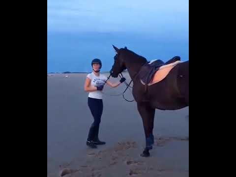 Лошадь испугалась волны
