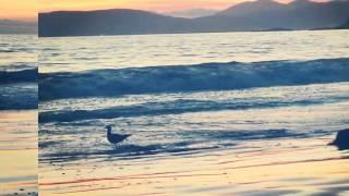 Cottage Inn by the Sea @ Pismo Beach, CA 2014