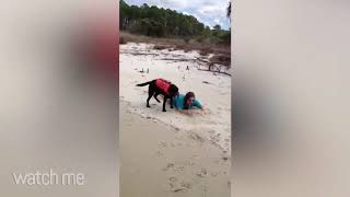 Funny Animal Fails Compilation   Animals Funny Clips Fail Vdeos 2020
