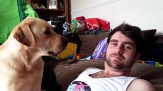 Ignoring a Labrador thumbnail