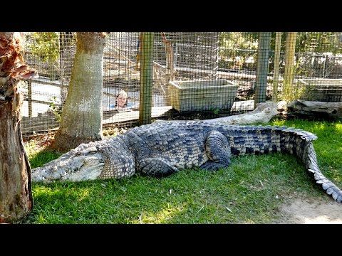 Feeding the Largest Croc in the US!