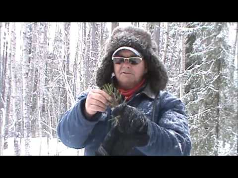 Alberta's Boreal Forest, Survival Quest