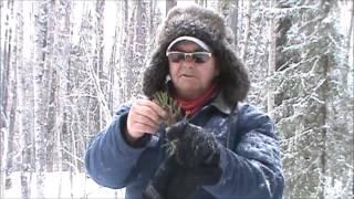 Video Alberta's Boreal Forest, Survival Quest download MP3, 3GP, MP4, WEBM, AVI, FLV September 2017