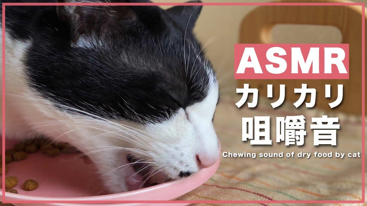 🍙ASMR 猫がカリカリ食べてる時の鼻シワ可愛すぎん?【咀嚼音】#174
