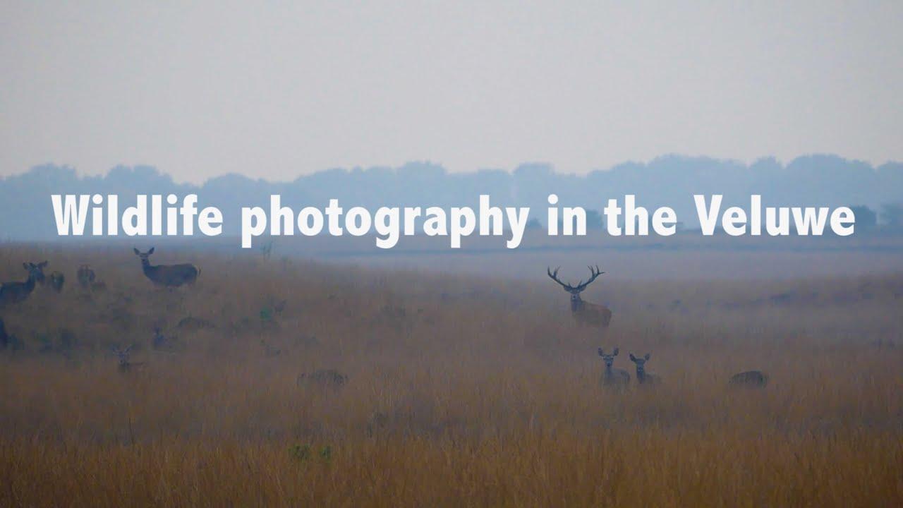 Wildlife photography in the Hoge Veluwe