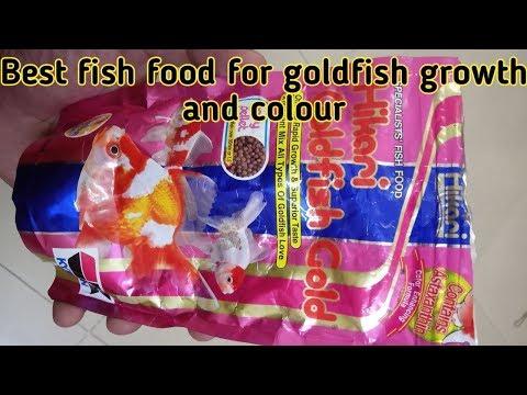Best Fish Food For Goldfish Ll Hikari Goldfish Gold Fish Food
