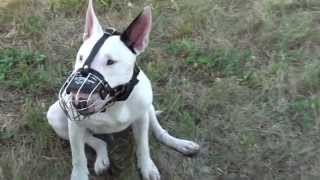 Bullterrier Wire Basket Muzzle