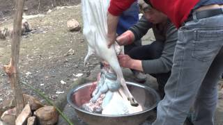 5 Preparing a Slaughtered Goat in China Farmland (Graphic?)
