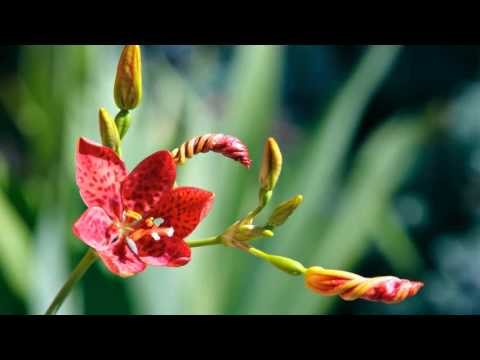 Exotic Flowers |  Popular Tropical Flowers