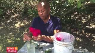 Kenneth Wingard's Tips For Cutting Fresh Roses