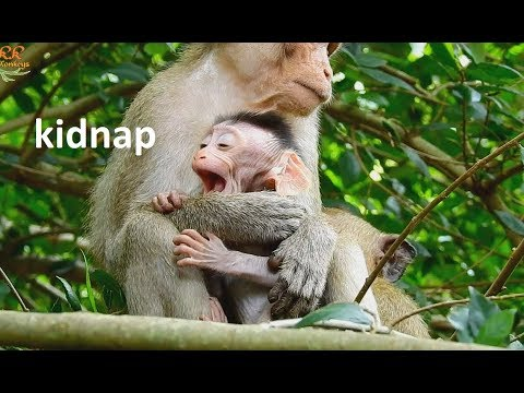 So Pity Newborn Baby ! Small Monkey Catch & Bite Baby  Young Mom Pull Hard get baby Back.