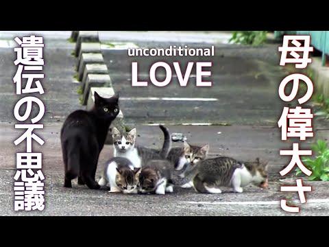 子育ては命がけ! 黒猫ママと5匹の子猫