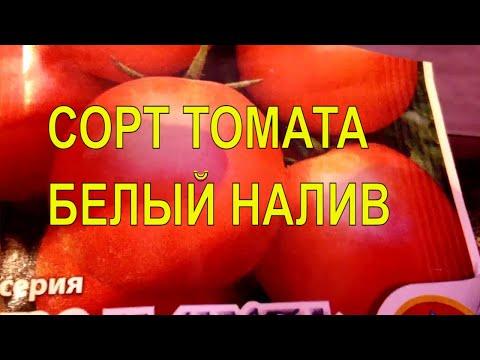 Сорт томата Белый Налив/ Описание и характеристики сорта/Урожайные сорта томатов | характеристики | урожайные | описание | томаты | томата | сорта | налив | белый | сорт | том