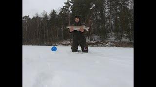 Рыбалка в конце января, ловля щуки в глухозимье  Зимняя рыбалка 2020
