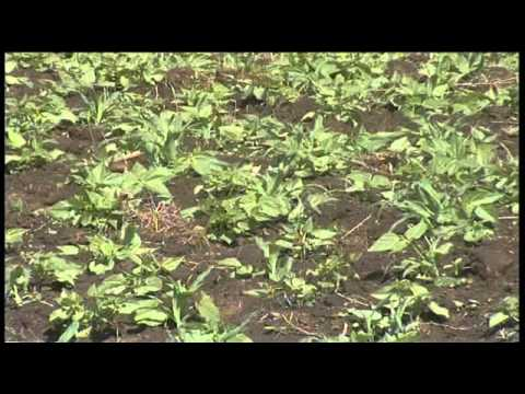 Business Weekly Agriculture And Climate Change