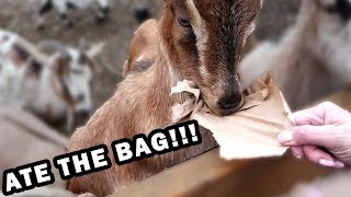 He Snatched ENTIRE Bag of Food! Funny Petting Zoo | Matt3756 Vlogs