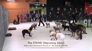 Alpha Advanced April 2015 - Heeling & Stand-step-away (stay)
