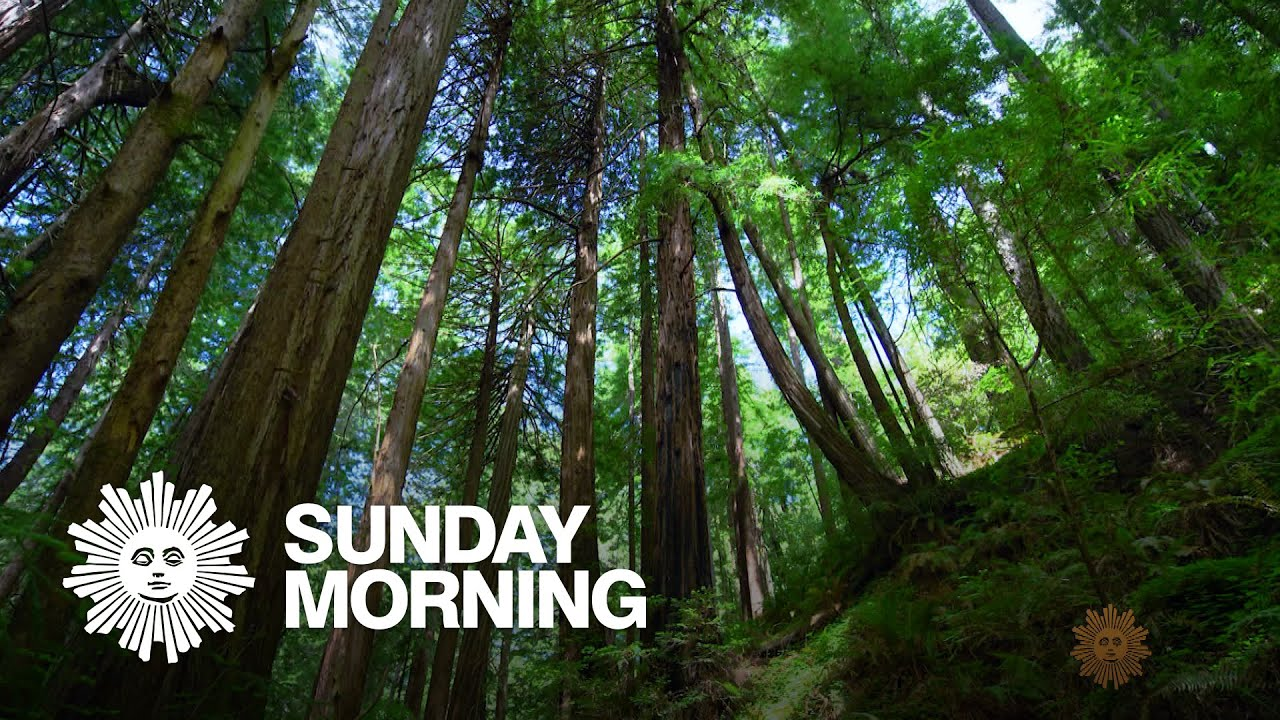 Nature: Muir Woods National Monument