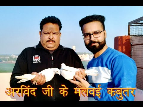 Arvind Ji Ke Pure Malwai (Punjabi) Kabooter In Jalandher (Punjab) Part-1 By Aman Prabhakar H