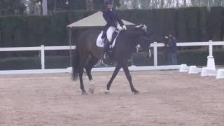 FEI Dressage Horse for sale: Sarotti 57  - Prix St Georges level