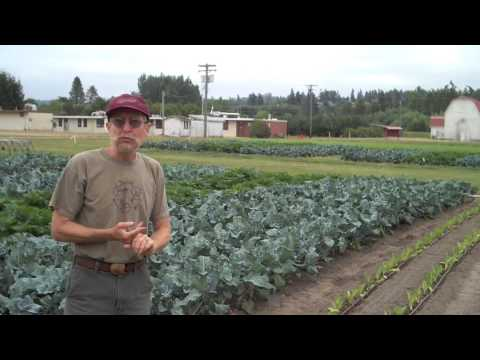 Introduction to the WSU Organic Farming System Research in Puyallup, WA