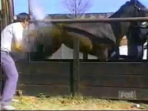 som de coice de cavalo