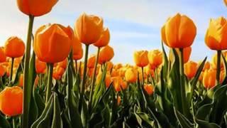All Angels   The Flower Duet Flowers Video(Enjoy... :), 2012-07-02T19:55:08.000Z)
