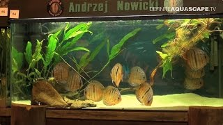 6th Silesian Aquarium Weekend 2014 (pt.4) - Aquariums in the central and right part of the hall