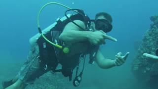 Listen to Humpback Whales sing while scuba diving Mala Pier. Maui, Hawaii 2016